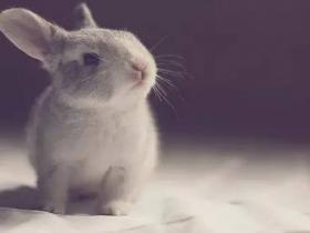 离春天只有二十公分的雪兔-李娟