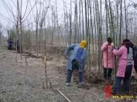 台儿庄区邳庄镇再掀冬季植树造林热潮(图)