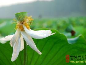 摄影报道:《古城台儿庄》网站记者台儿庄运河湿地随拍(2)