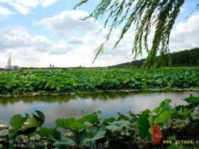摄影报道:《古城台儿庄》网站记者台儿庄运河湿地随拍(4)