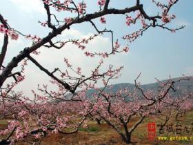 摄影报道:革命老区黄邱采风-----张山子镇万亩桃花峪