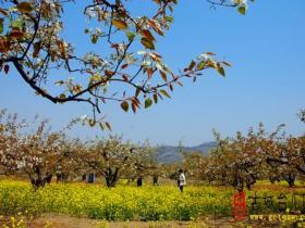 枣庄市民族摄影家协会年度采风活动----古梨园风光(山亭房庄)
