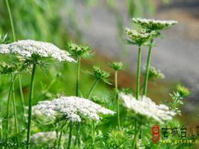 台儿庄运河湿地•樱花洲4