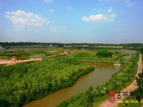 台儿庄运河湿地•樱花洲9