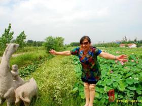 摄影报道:台儿庄运河湿地之百荷园随拍