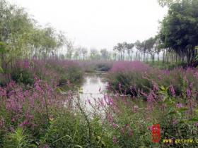 摄影报道:台儿庄老大桥下樱花洲湿地风光(一)