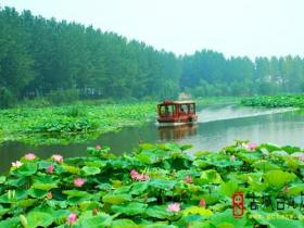 台儿庄运河湿地•马兰屯百荷园7