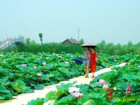 台儿庄运河湿地•马兰屯百荷园8