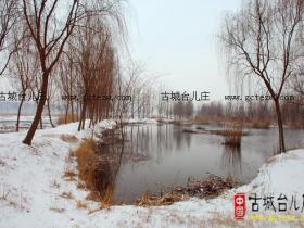 摄影报道:中国最美水乡古城台儿庄之涛沟河湿地雪景(四)