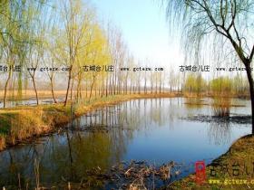 """""""生态涛沟河畔 万亩油菜花香""""古城台儿庄网记者采风(四)"""