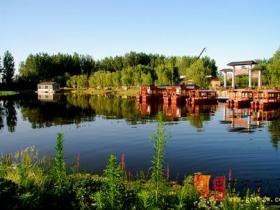 台儿庄运河湿地美景多2