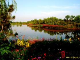 【摄影报道】台儿庄运河湿地公园就是百花园(五)