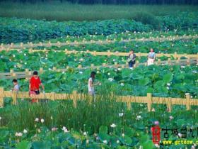 台儿庄运河湿地公园获评省级乡村旅游示范点(图)