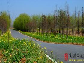古城台儿庄:百里环城生态走廊绿意浓(图)