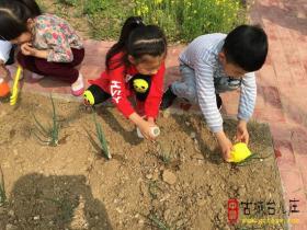 台儿庄区实验幼儿园:拥抱春天 播种希望(图)