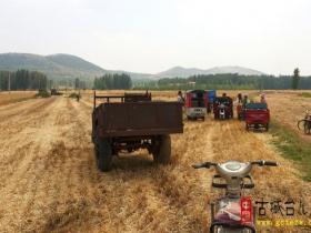 【读图时代】山东台儿庄麦收进行时,满满的收成遍地金