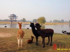 精品湿地 • 台儿庄双龙湖公园(四)