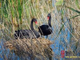 精品湿地 • 台儿庄双龙湖公园(五)