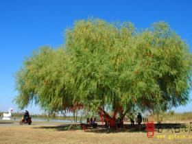 精品湿地 • 台儿庄双龙湖公园(七)