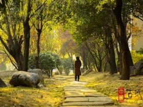 【图文】台儿庄古城:一首《凉凉》唱了三生三世,一首《暖暖》唱了冬日暖阳