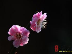 柳绿花香——台儿庄古城春天美景2