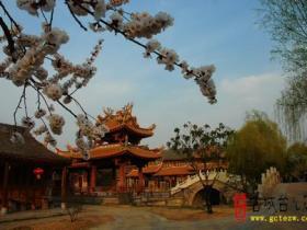 柳绿花香——台儿庄古城春天美景10