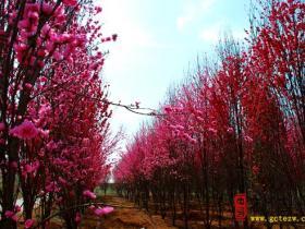 【读图】走进憩园(库山)风景区 感受春天的气息(二)