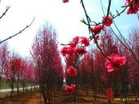 【读图】走进憩园(库山)风景区 感受春天的气息(四)
