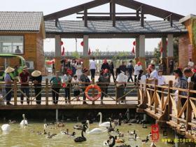 【图文】五一小长假台儿庄古城共接待游客20.96万人次
