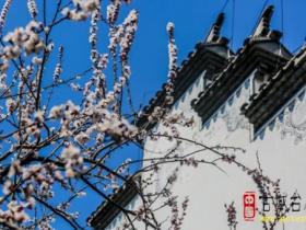 【图文】台儿庄古城:百花低眸时,唯她别样生!