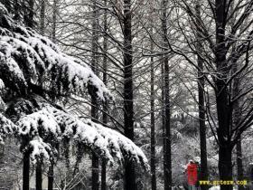 【读图】如期而至!台儿庄下大雪啦!