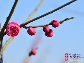 【读图】来自台儿庄双龙湖湿地观鸟园的美图