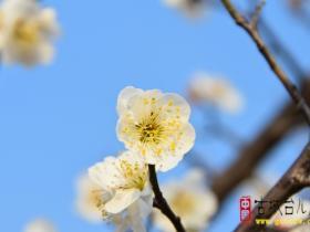 【图文】在这里完全满足了对于春的期待——台儿庄双龙湖