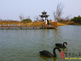 【图文】台儿庄双龙湖:看这里,这一对一对的是真能撒狗粮