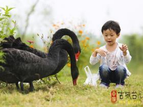 【图文】台儿庄双龙湖湿地观鸟园劳动节(放假通知)