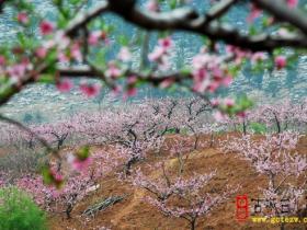 【读图】厉害了,我的黄丘花海——赏张山子桃花 人在花中游(四)