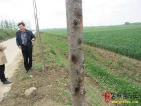 春季苗木防病正当时——台儿庄区林业局对今春造林苗木成活率开展调查(图)