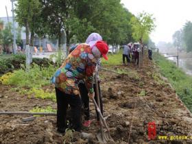 邳庄镇开展绿化提升 推进创卫工作(图)