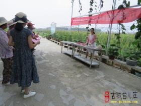 """台儿庄区林业局开展""""打击假劣种苗和侵犯植物新品种权""""宣传活动(图)"""