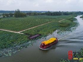 台儿庄:湿地盛夏绿意浓,游人乘船赏美景(图)