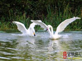 一滴两水间的内敛与储秀——山东台儿庄双龙湖(图)