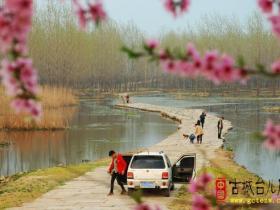 【图文】春到涛沟河(台儿庄)