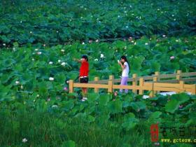 【滋润心灵】古城台儿庄:马兰湿地的睡莲(图)