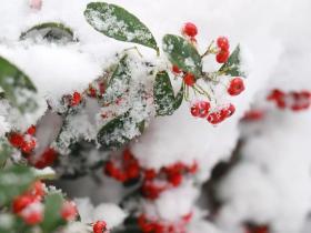 一个寒冷的冬,一场温暖的雪