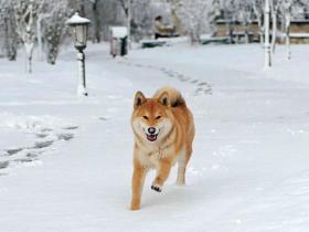 出门遛狗,不规范行为的危险指数是多少