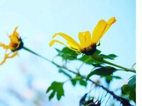 春风再美,也比不上你的笑-黎戈