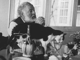 海明威|我爱冒险,也爱着我的猫 - 十点猫