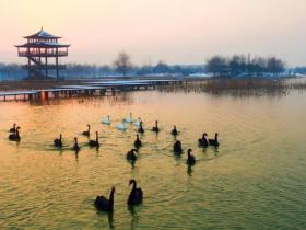 元旦假期捕野鱼、品美食:台儿庄田园生态游