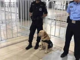 警犬执勤过程中打瞌睡,一本正经的坐着睡觉,网友:有些心疼