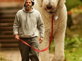 """""""我家狗有400斤重!""""美国男子晒自家巨型犬的照片,网友傻眼了..."""